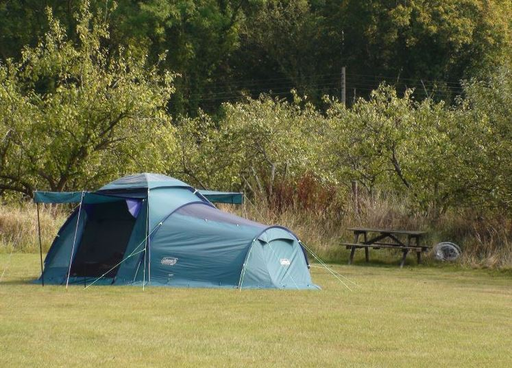 Apple Acres Caravan and Camping tent in orchard