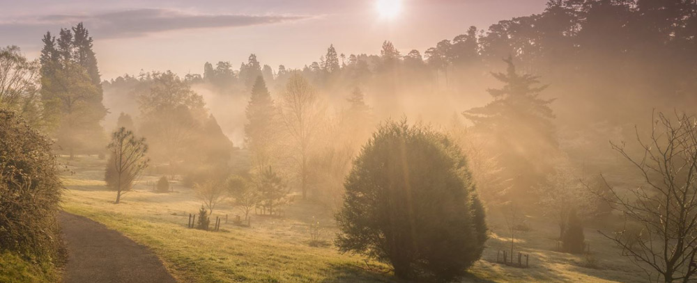 Misty Autumn at Bedgebury