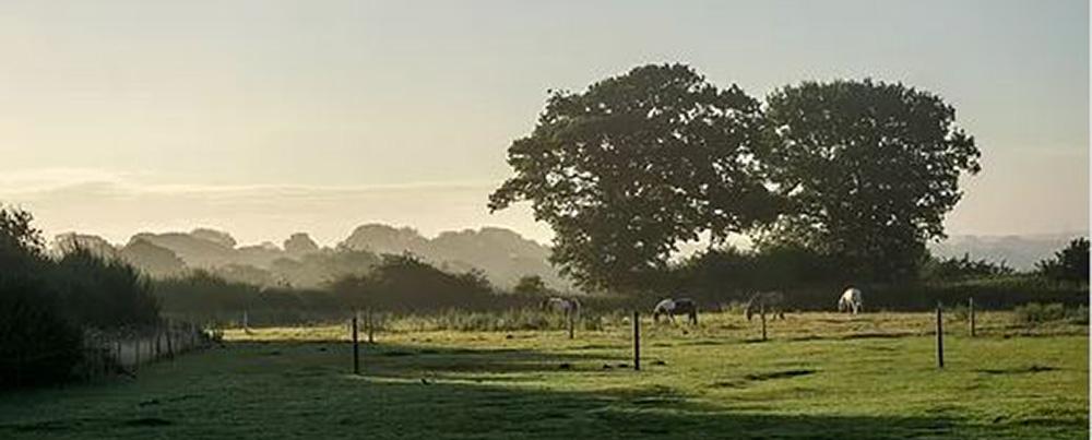 field at Coldblow Farm