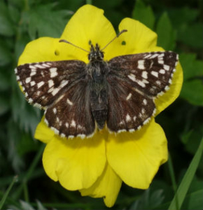 The Wonders Of Nature In The High Weald Countryside