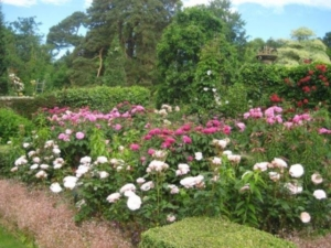 Pashley Manor Gardens - Rose Garden by Kate Wilson
