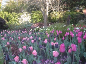Pashley Manor Gardens - Tulip Festival by Kate Wilson