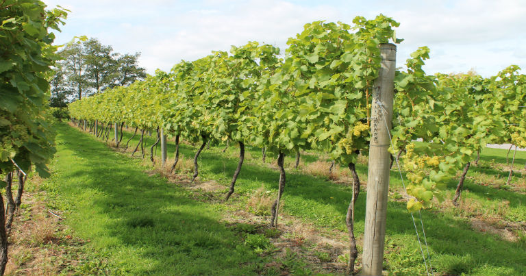 Vineyards Tunbridge Wells