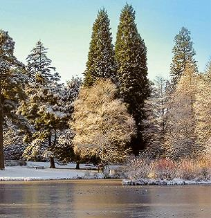 A Bedgebury Pinetum Winter