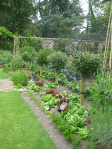 The productive kitchen garden at Pashley Manor Gardens - Photo by Kate Wilson
