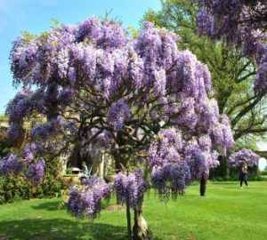 Spring Spectacular at Hole Park Gardens