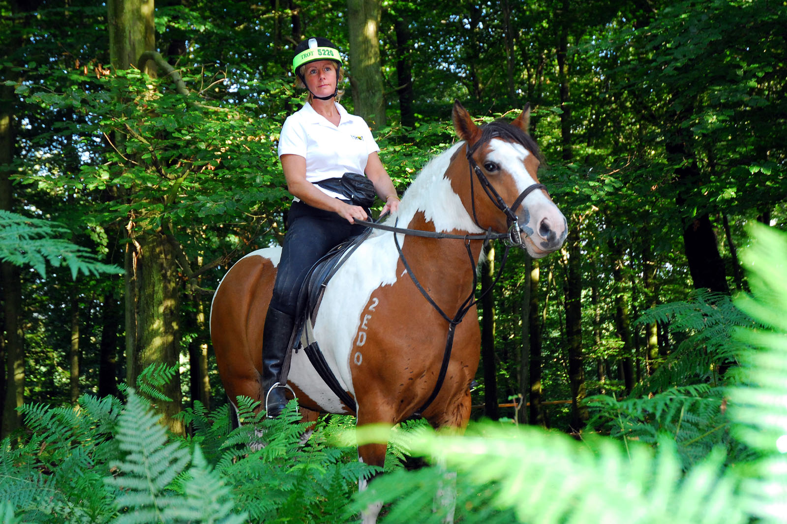 Woodland Horse Riding - photo by Mike Bartlett