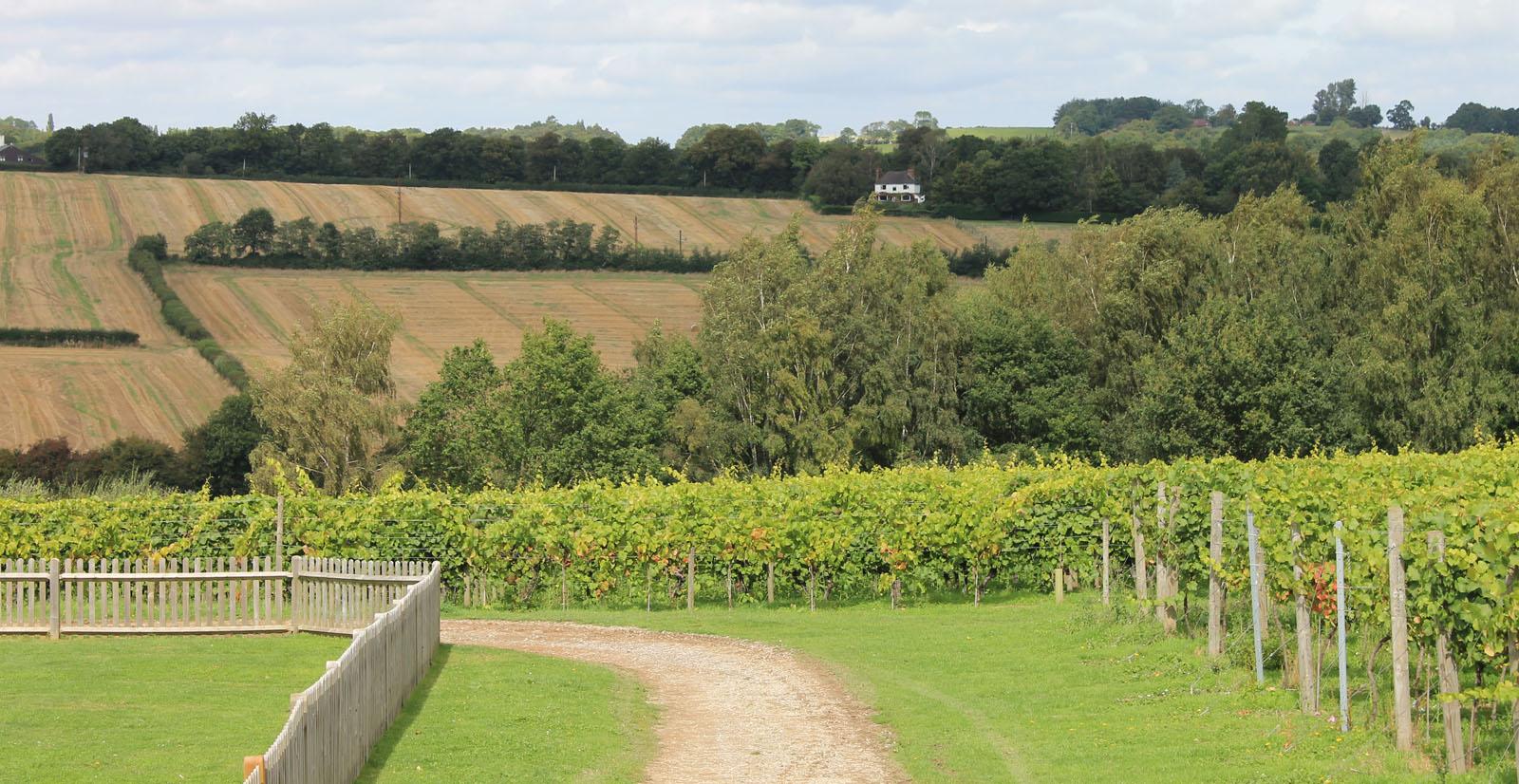 Lamberhurst vineyards