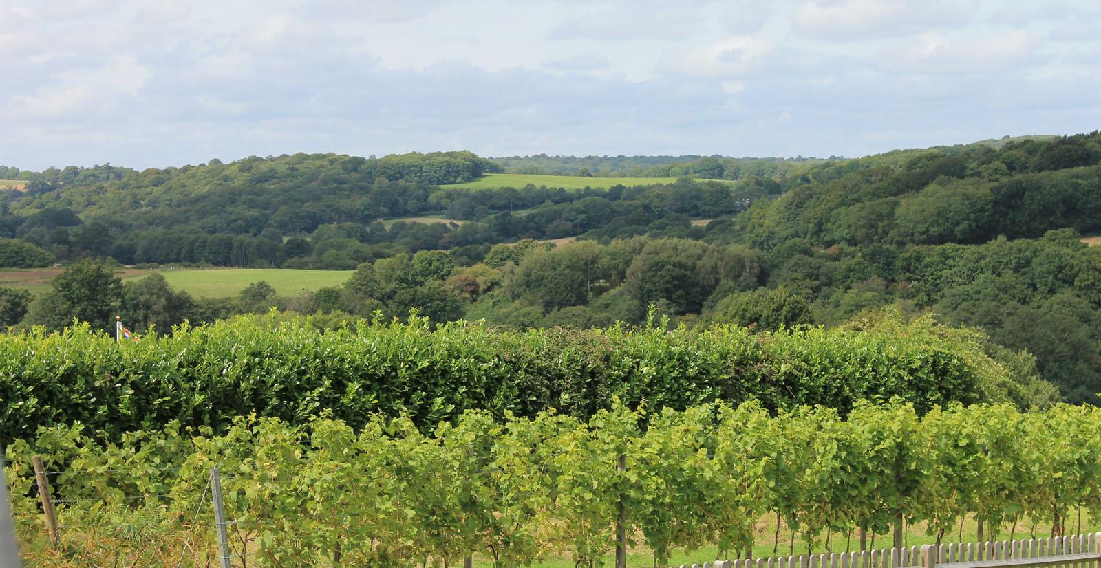 Country vineyard by Lynda Grigs