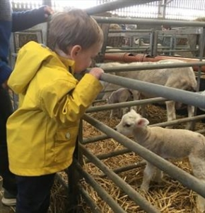 Lambing Day at Four Winds Farm
