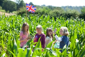 The maize maze at Penshurst Place and Gardens