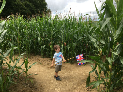 Fun in the Maize Maze at Penshurst Place