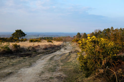 Ashdown Forest aka 100 aker wood