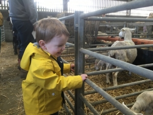 Lambing at Four Winds Farm | Clare Lush-Mansell