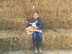 Lamb 'selfie' at Four Winds Farm - Clare Lush Mansell