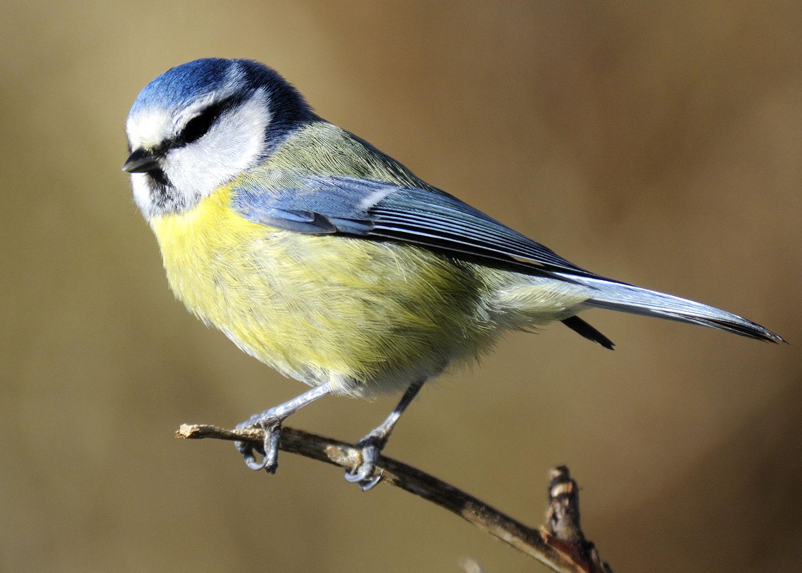 Wildlife at Broadwater Warren in Tunbridge Wells (Mike Bartlett)