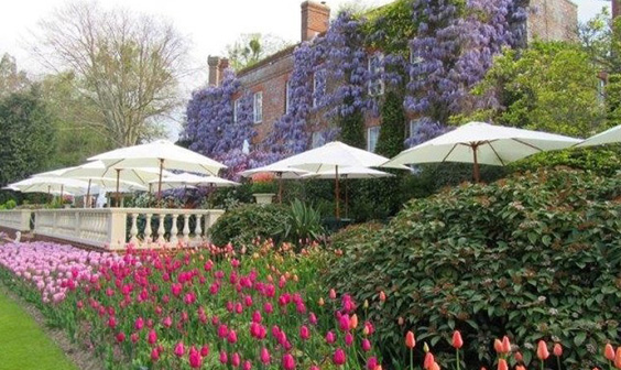 Wisteria and tulips Pashley Manor Garden