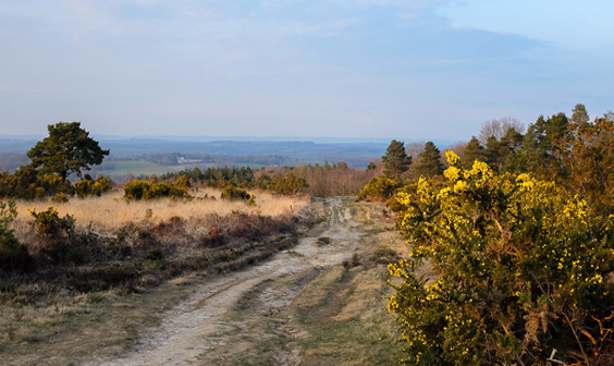 Nature reserves and woodlands