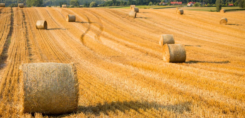 Celebrate harvest time